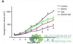 EGCG联合吉非替尼抑制肿瘤增长具有协同作用